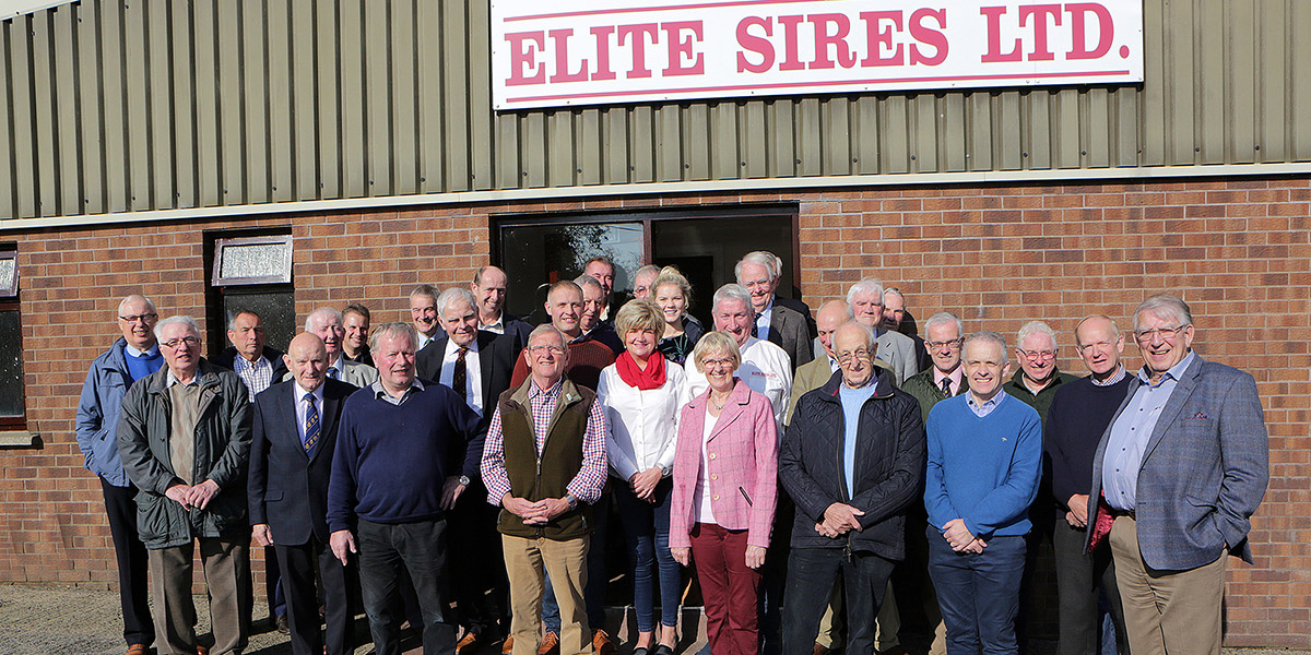 Elite Sires leading provider of high-quality pig semen