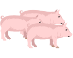 Increase number of piglets