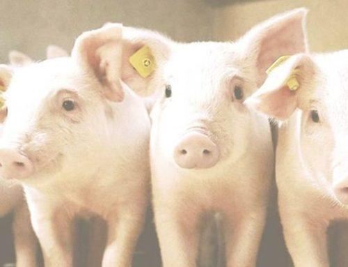 Positive impact of breeding goals on profit